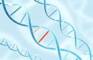 Kabar Kesehatan – Dapatkan Mutasi Gen Mengobati Diabetes dan Penyakit Jantung