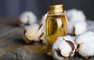 Kabar Kesehatan – Dapatkan Minyak Biji Kapas Membantu Menurunkan Kolesterol Jahat