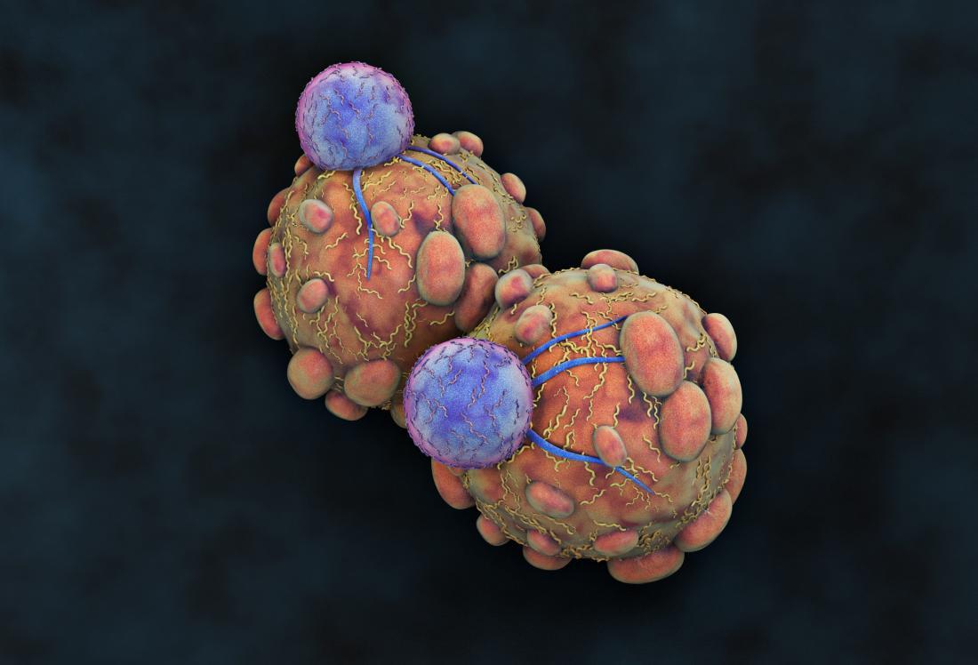 Kabar Kesehatan – Cara Baru untuk Memanipulasi Sel-Sel Kekebalan Tubuh Dapat Mengobati Kanker Bagian 2
