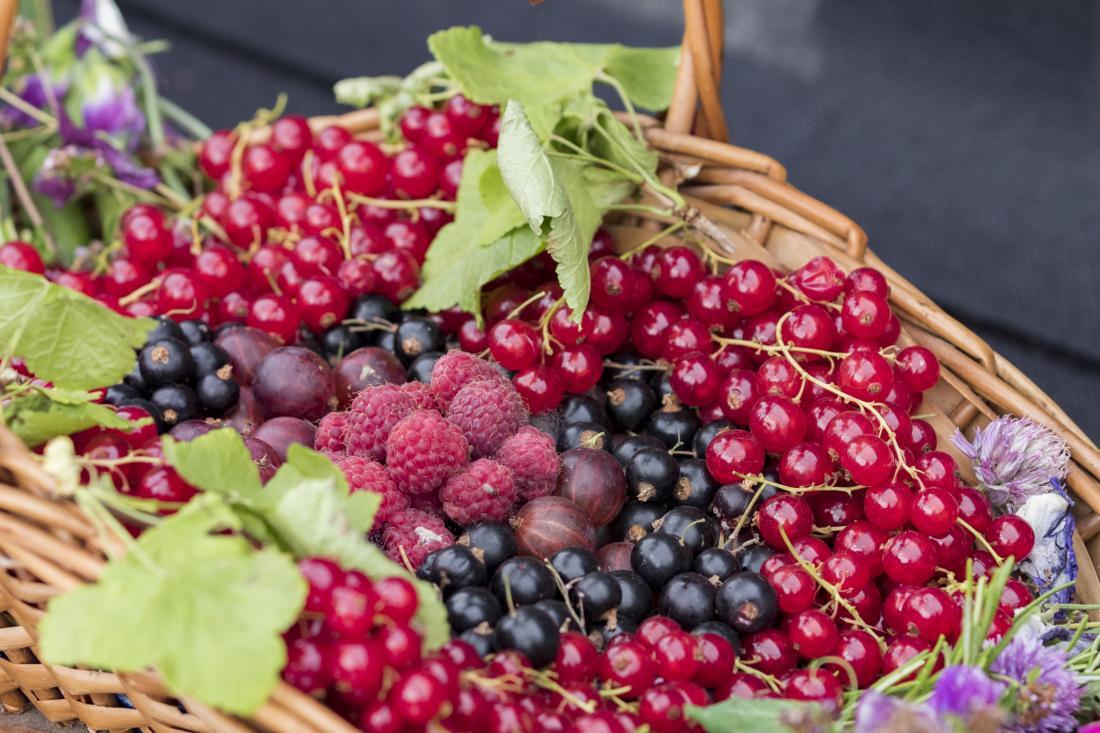 Kabar Kesehatan – Pigmen Alami Dapat Membantu Mengurangi Risiko Kardiovaskular
